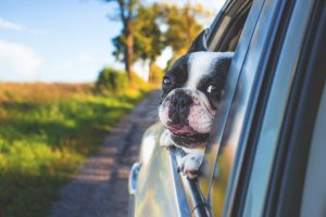 If your dog enjoys a car ride, moving by car might be your best option.