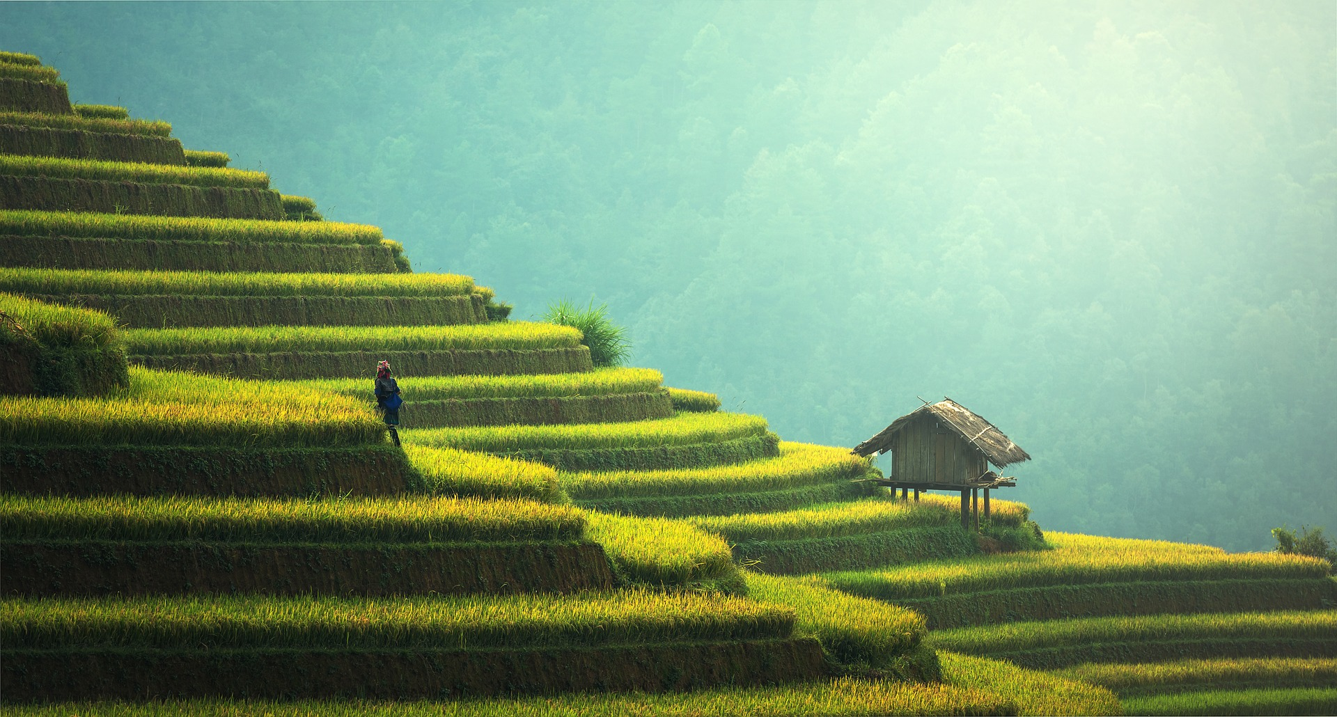 a slope layered with rice fields