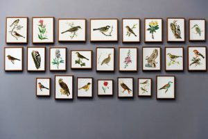 NYC apartment design idea - wall with many pictures of birds.
