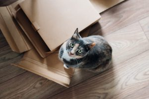 Pets,boxes, moving - tips for renting a home in Brooklyn