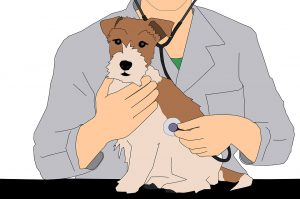 vet and a dog - prepare your pet for a move to New York