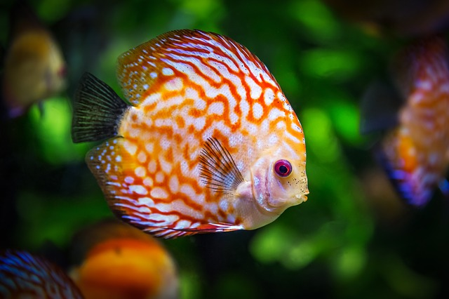 pay attention to the fish when you want to relocate an aquarium