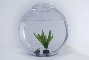 A aquarium, when you relocate an aquarium be careful it is fragile