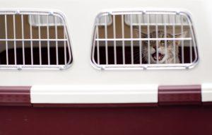A cat in the crate