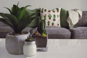 If you want to decorate your home on a budget, you'll need many plants.