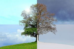 Tree that shows the look of four seasons.