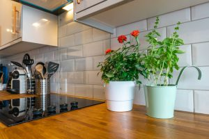 remodel your kitchen with adding some green plants